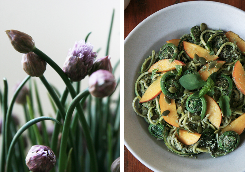 Zucchini Pasta with Pumpkin Seed Pesto and Fiddlehead Ferns