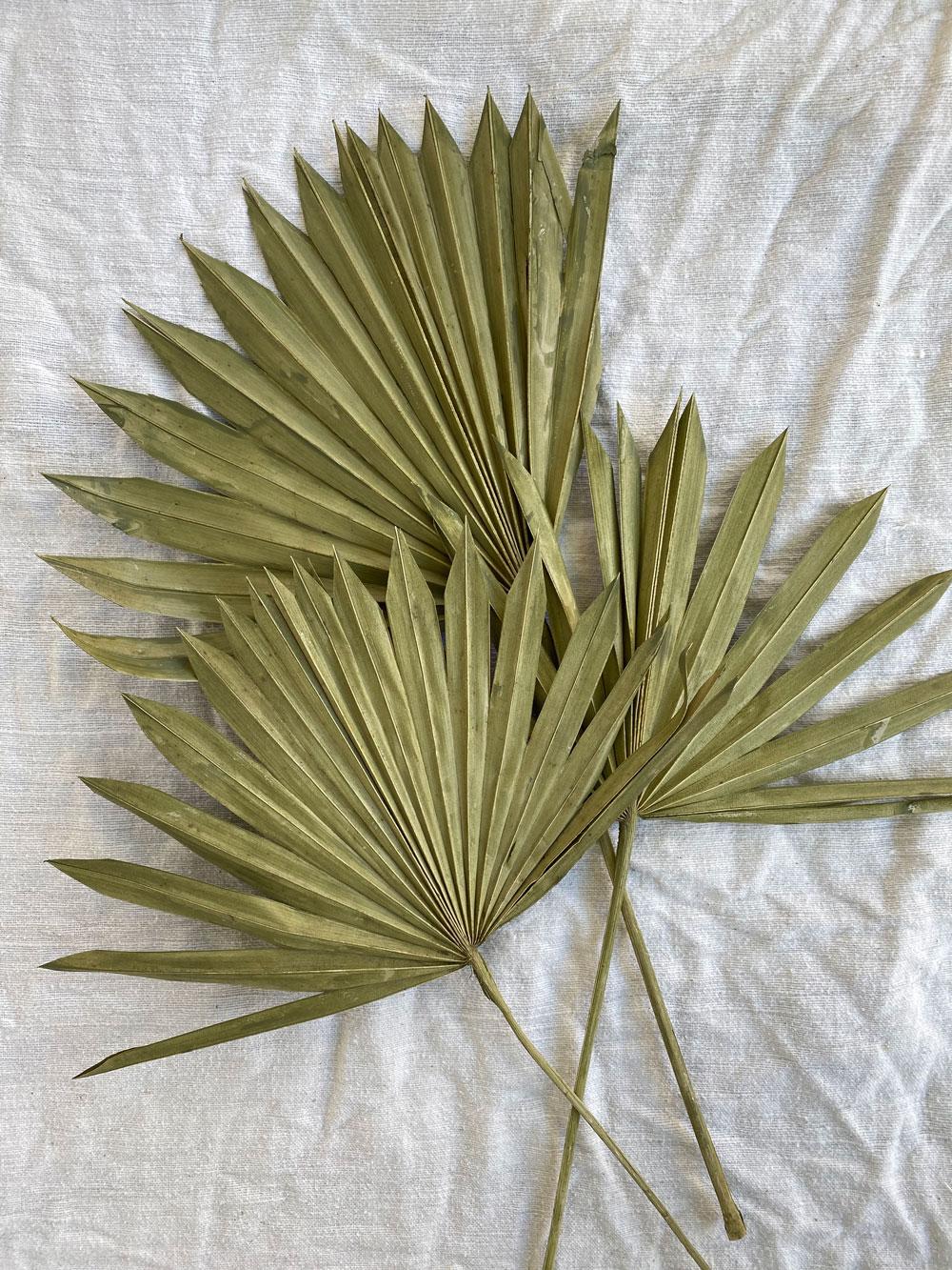 Dried Sun Palms